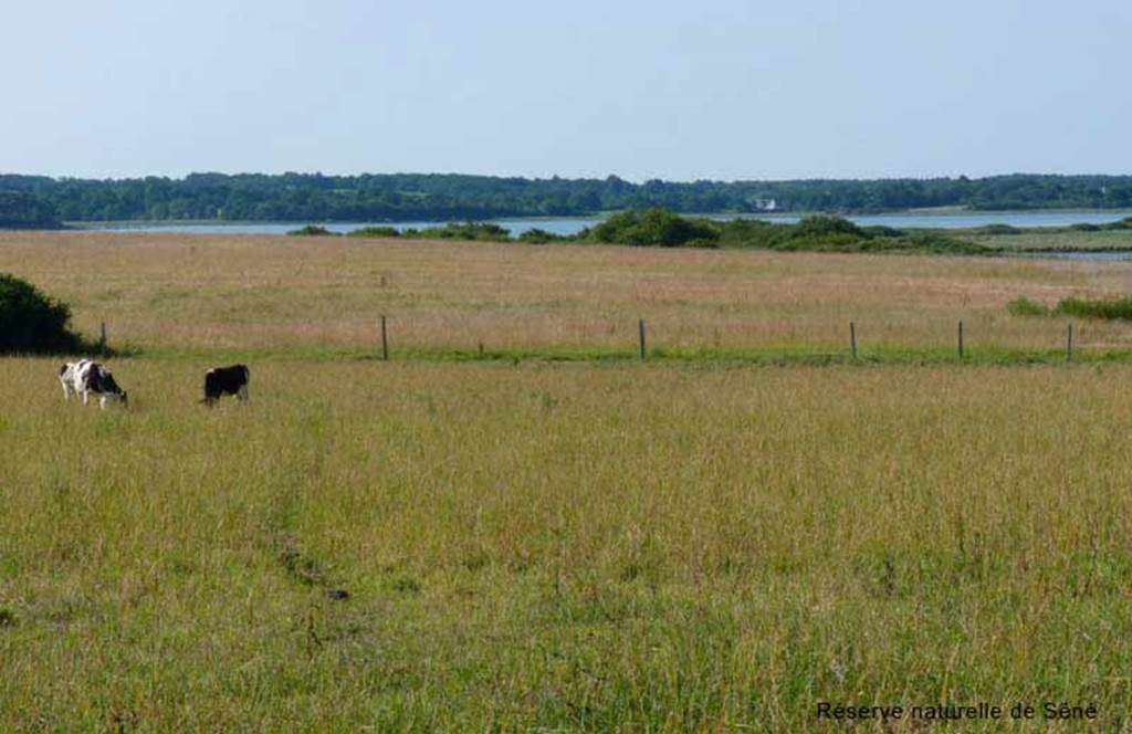 Rserve-naturelle-Sn-Golfe-du-Morbihan-Bretagne-sud3fr