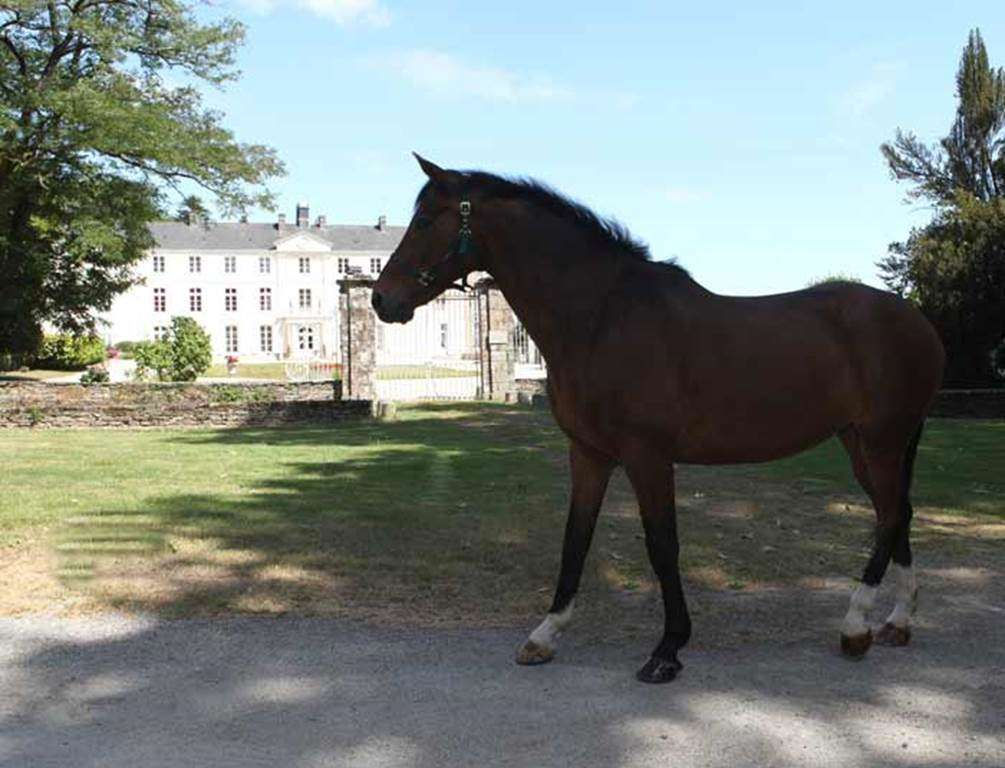 Centre-Equestre-Les-Ecuries-de-la-Chnaie-St-Av-Golfe-du-Morbihan-Bretagne-sud0fr