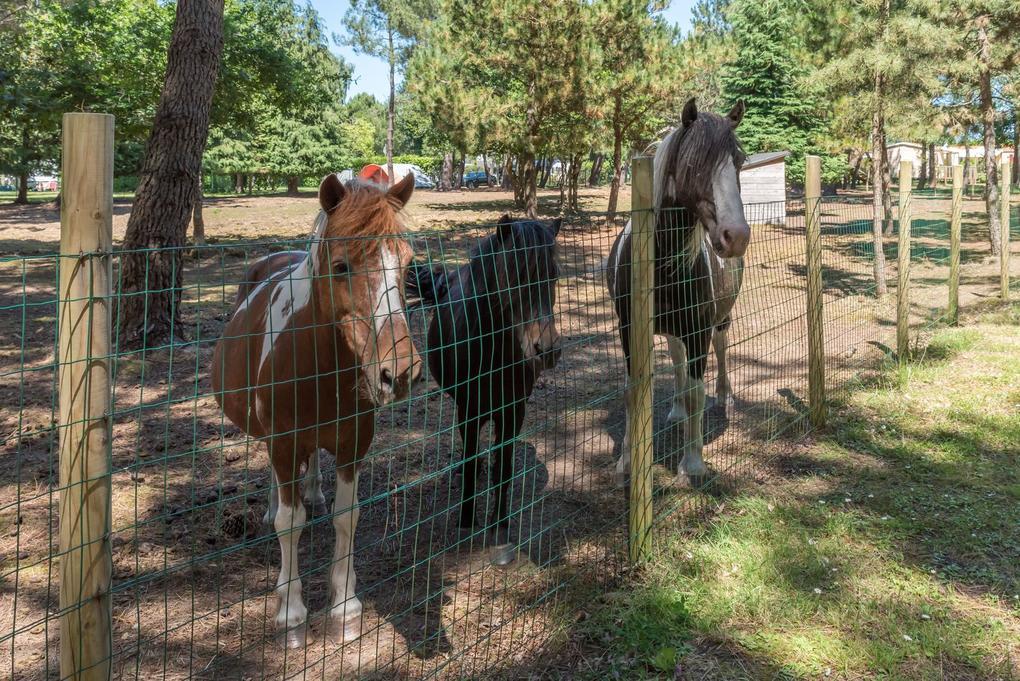 mini-ferme_poneys_camping-les-bruyeres_carnac