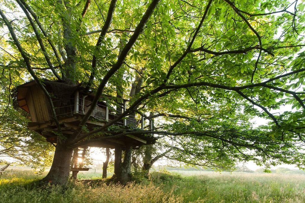 cabane dans les arbres_Dihan Ploemel