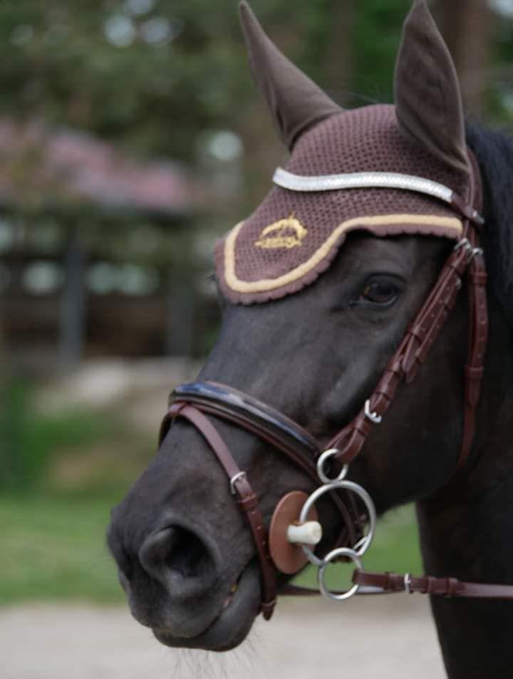 loisirs_sports_centre_equestre_carnac_morbihan_bretagne_sud