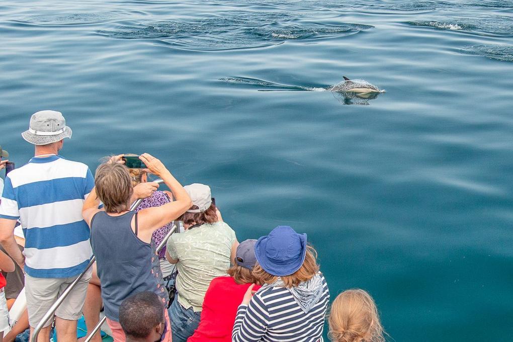 faune océan sortie mer