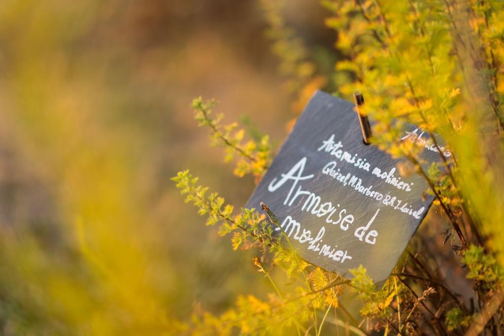 botanique- Yves Rocher La Gacilly