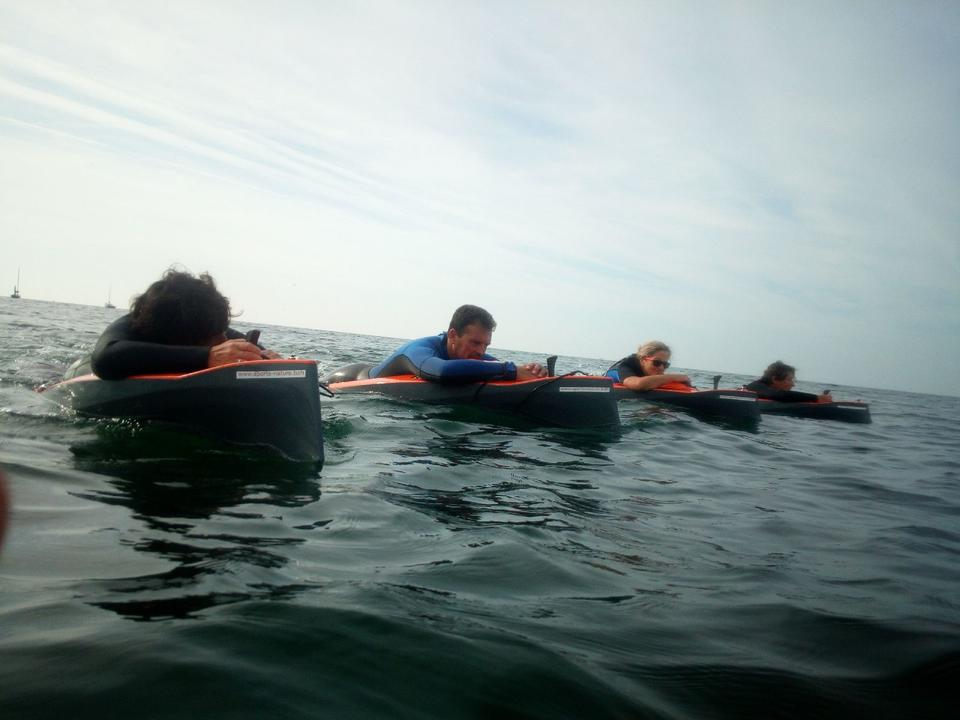 palmes_pilates_activites-nautiques_sports-nature_carnac