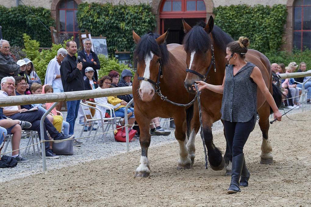 spectacle-equestre-exterieur_chevaux-de-trait_site-a-visiter_haras-national_hennebont