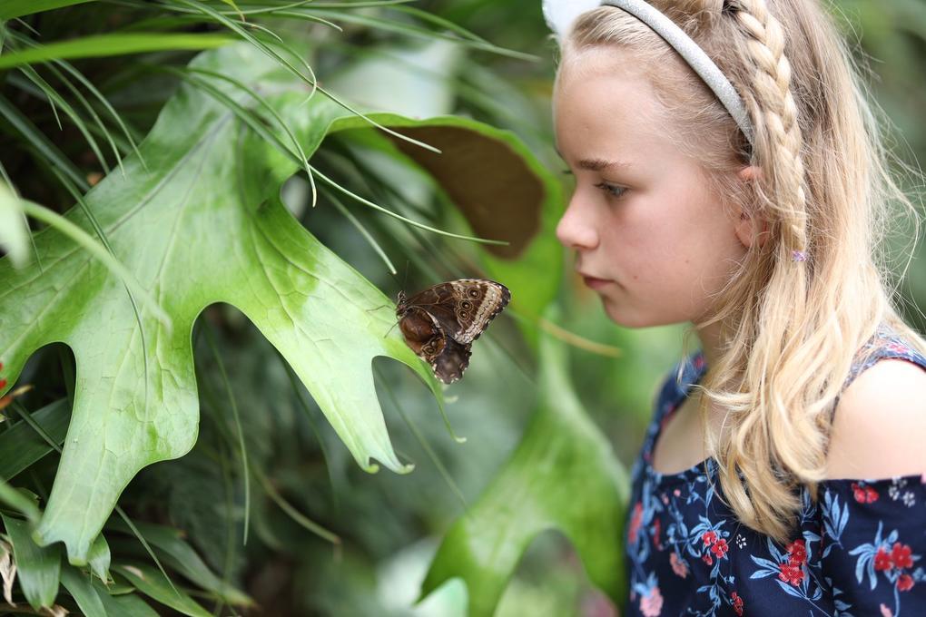 enfant-decouvert_site-a-visiter_jardin-aux-papillons_vannes