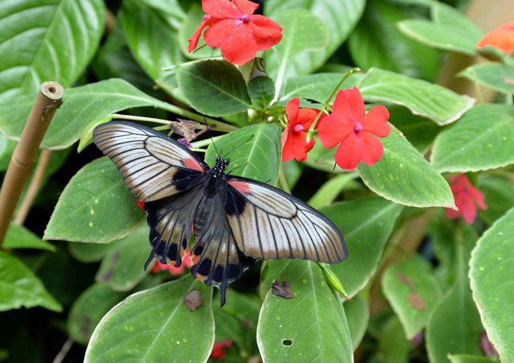 hdjardinpapillons12
