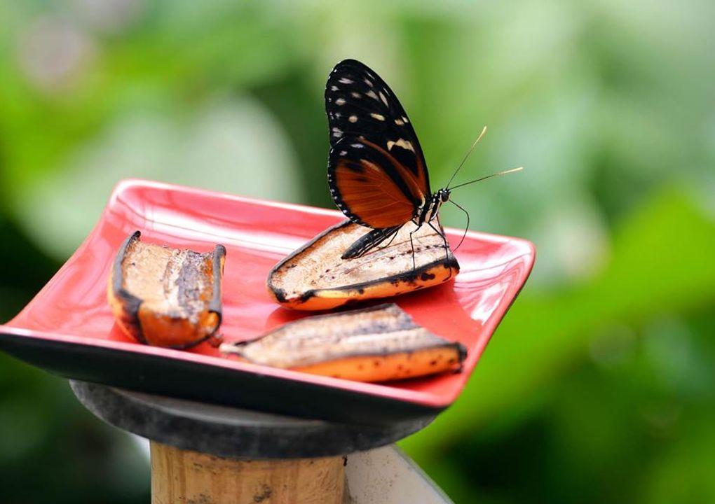 hdjardinpapillons24