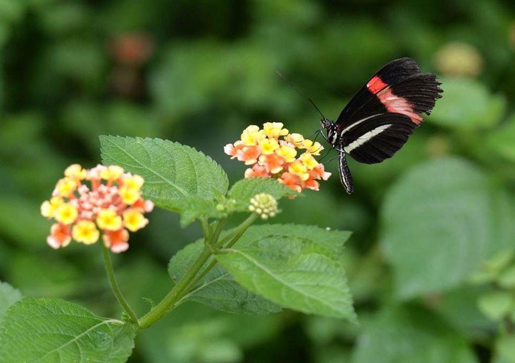 hdjardinpapillons25