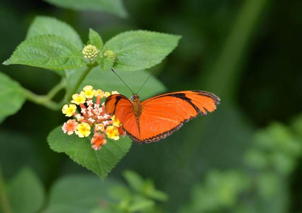 hdjardinpapillons26
