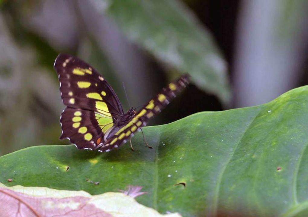 hdjardinpapillons30