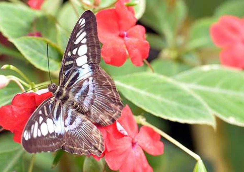 hdjardinpapillons31