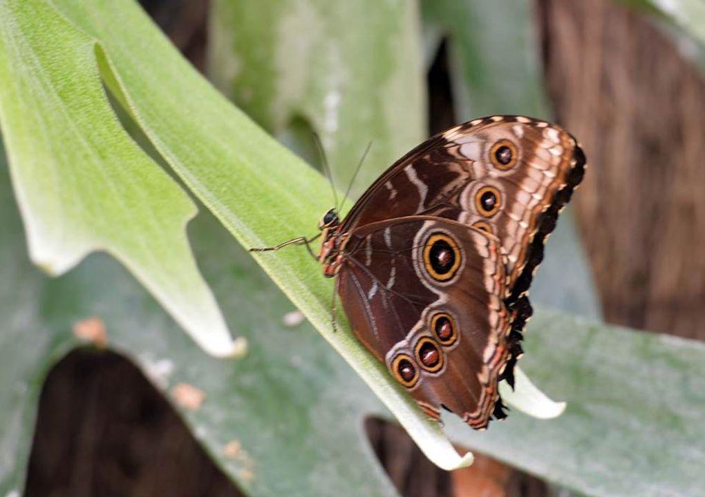 hdjardinpapillons35