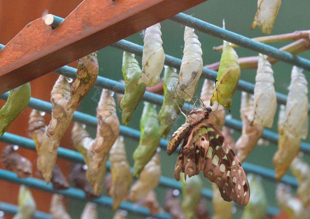 hdjardinpapillons39