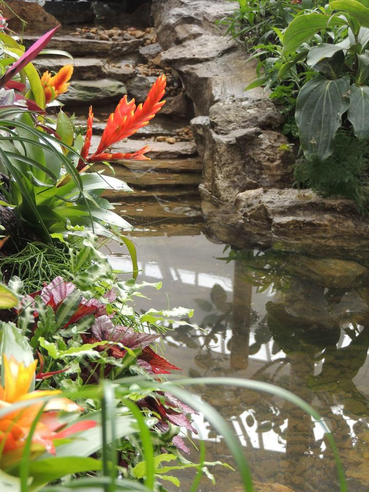 interieur_fleur_site-a-visiter_jardin-aux-papillons_vannes