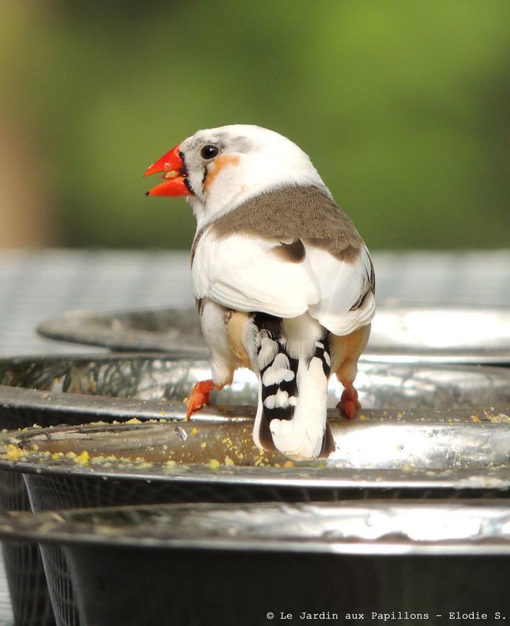 oiseau_site-a-visiter_jardin-aux-papillons_vannes