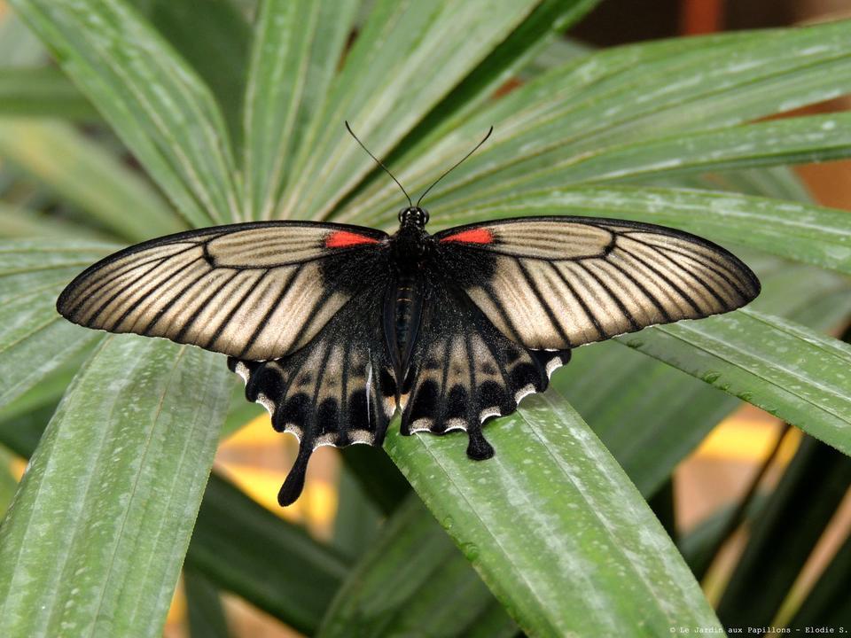 papillon_site-a-visiter_jardin-aux-papillons_vannes