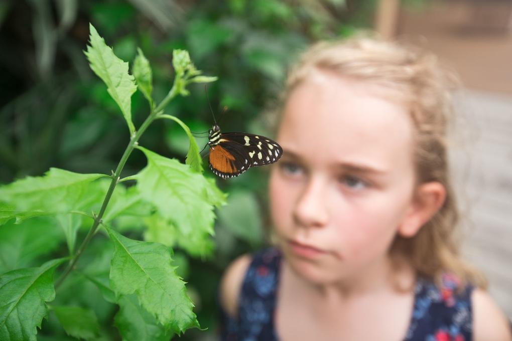 site-a-visiter_jardin-aux-papillons_vannes