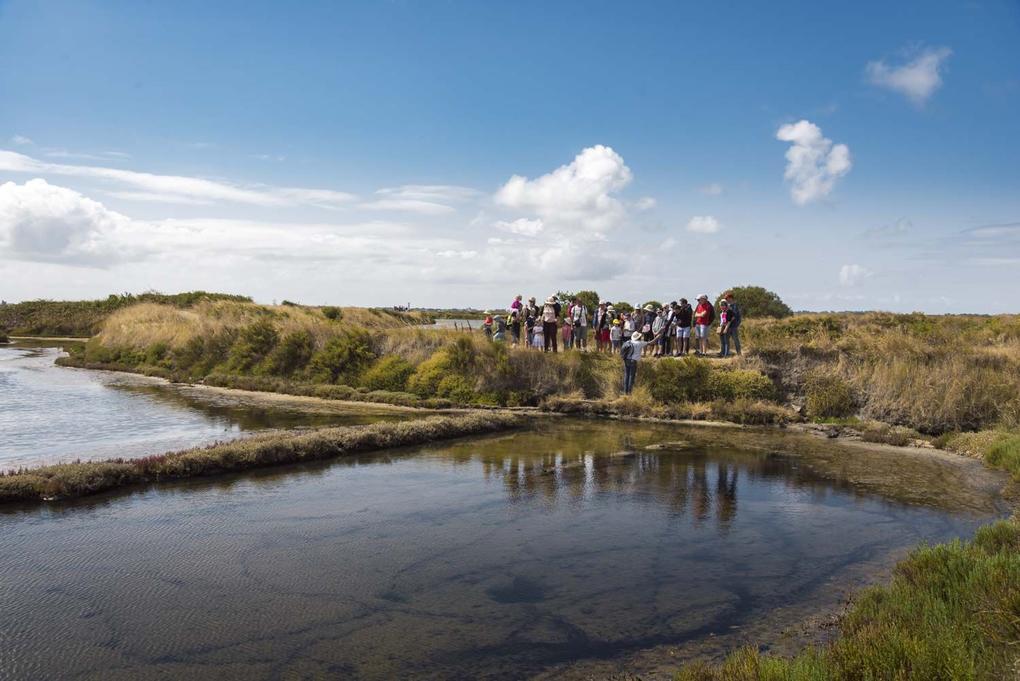 visite-de-groupe-des-marais-salants_site-a-visiter_terre-de-sel_guerande