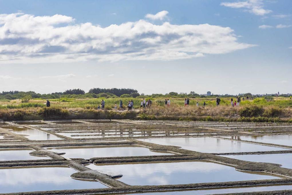 visite-des-marais-salants_site-a-visiter_terre-de-sel_guerande