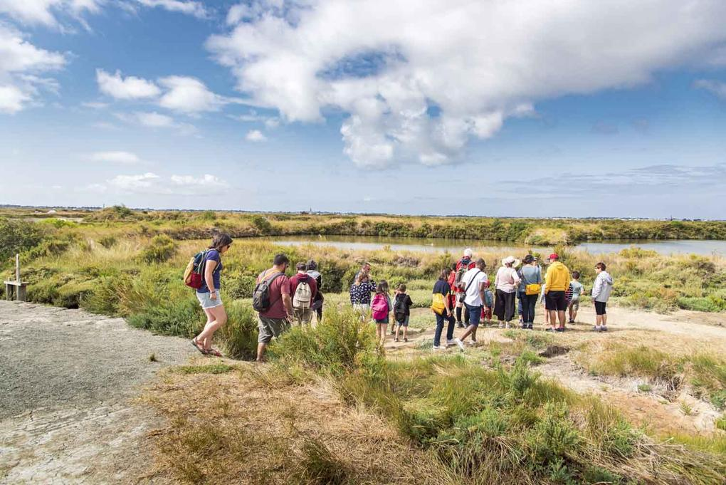 visite-guidee-des-marais-salants_groupe_site-a-visiter_terre-de-sel_guerande